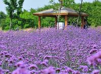春晖香草园